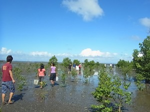 OKEA-activity-Mangrove-10
