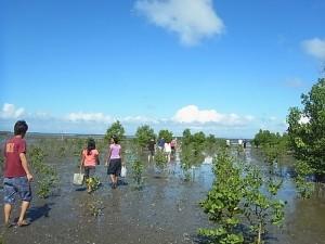 OKEA-activity-Mangrove-10